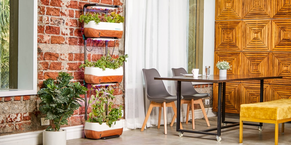 Everything you need to know about the layout of an Indoor Garden