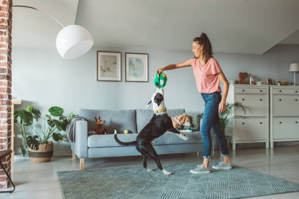 Pet Care: What Does a New Dog Owner Need to Know?